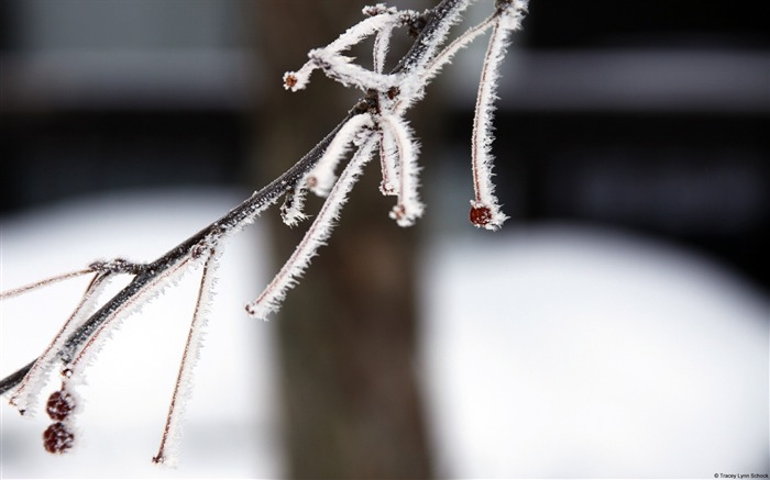 Frost branches-Windows 10 HD Wallpaper Views:1932