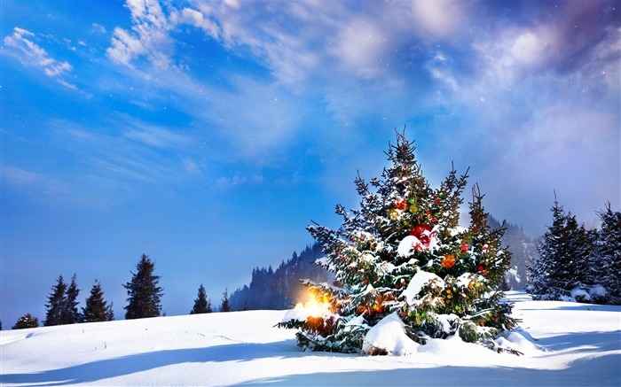 Outside christmas trees-2016 Merry Christmas Wallpaper Views:5811 Date:12/9/2015 7:35:02 AM