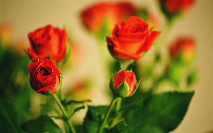 Roses flowers bouquet bokeh-High Quality HD Wallpaper Views:2106