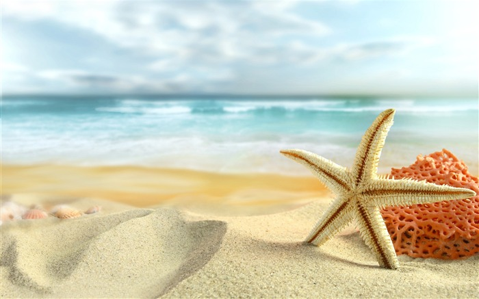 Starfish beach summer-High Quality HD Wallpaper Views:1569