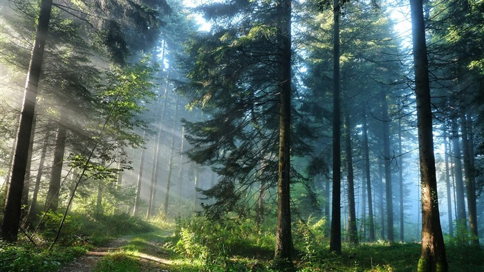 Thick forest-High Quality HD Wallpaper Views:1334