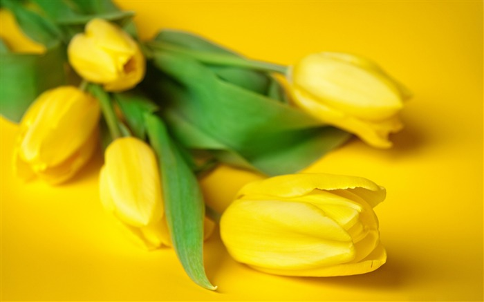Yellow Easter Flowers-Plant photography Wallpaper Views:1983