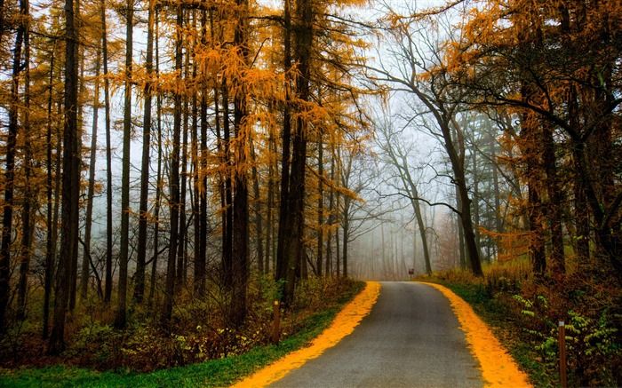 Autumn Morning Road Misty-Nature HD Wallpaper Views:2125