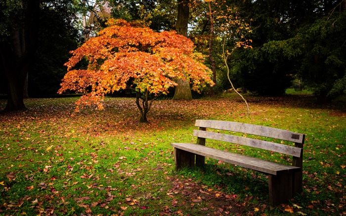 Autumn Yellow Trees Bench-Nature Photo HD Wallpaper Views:1979