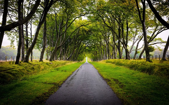 Beautiful Trees Road Scotland-Nature HD Wallpaper Views:1417