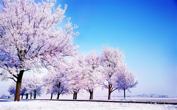 Blue cold trees white sky winter snow-Landscapes HD Wallpaper Views:8168 Date:1/21/2016 5:53:16 AM