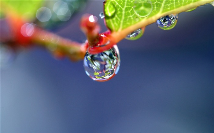 Branch dew drops shape-photography HD wallpaper Views:1850