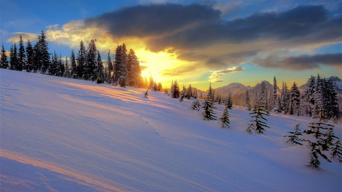Gilded clouds snowy pine trees-Nature Photo HD Wallpaper Views:1461