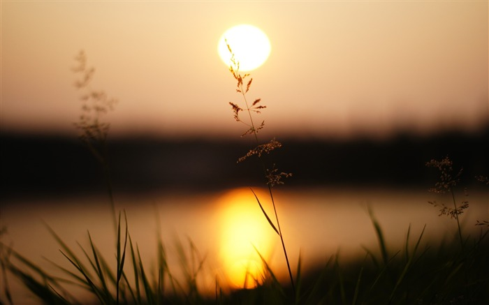 Grass sunlight sunset-photography HD wallpaper Views:1863