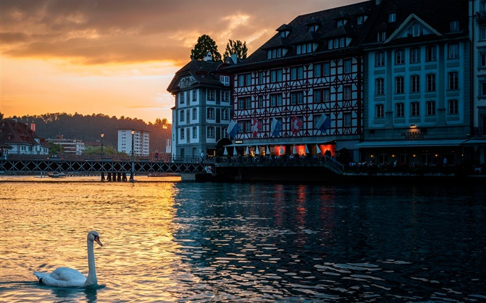 Lucerne switzerland swan-Architectural HD Wallpapers Views:3429 Date:1/11/2016 6:16:23 AM