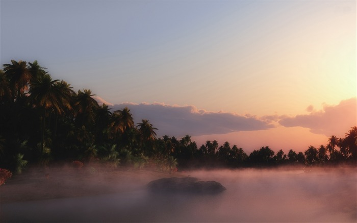 Palm trees fog sunset-Nature Photo HD Wallpaper Views:1596