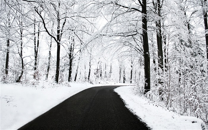 Winter forest clean road scenery-Landscapes HD Wallpaper Views:5015 Date:1/21/2016 6:06:05 AM