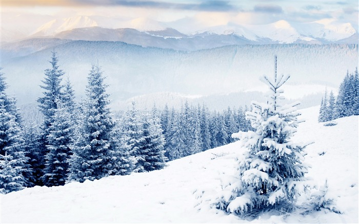 Winter season snow forest trees-Landscapes HD Wallpaper Views:6593 Date:1/21/2016 6:01:17 AM