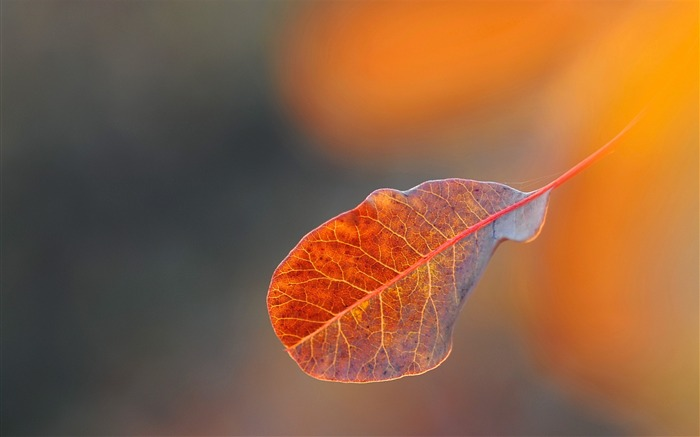 Background leaf gossamer-Macro HD Wallpaper Views:3042 Date:2/26/2016 8:01:51 AM