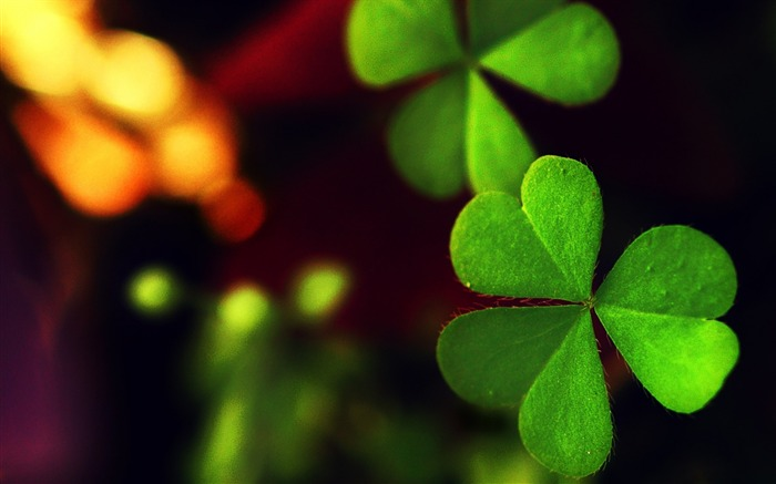 Leaf green clover-Macro HD Wallpaper Views:3290 Date:2/26/2016 8:08:48 AM