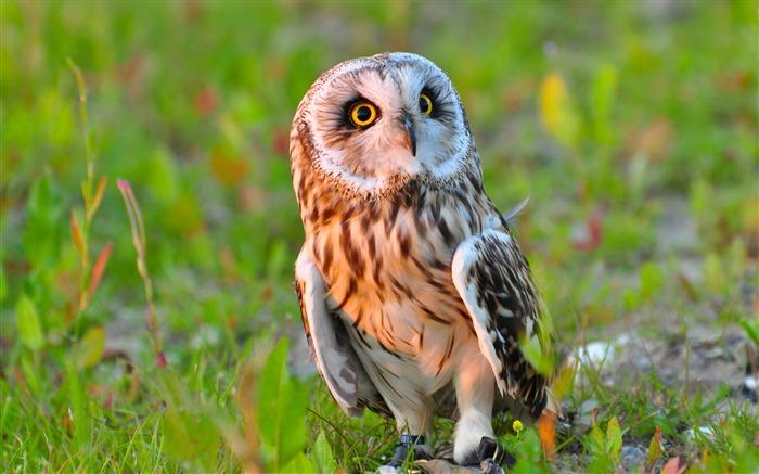 2016 nature animal photo hd fond d u0026 39  u00e9cran liste d u0026 39 albums