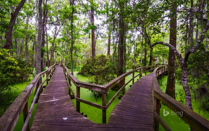 Wooden walkway Hilton Head Island Carolina-2016 Bing Desktop Wallpaper Views:1041