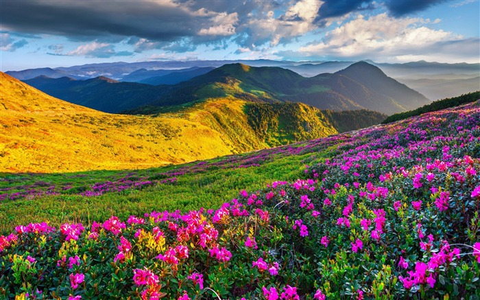 Alps meadows azalea mountains-Nature Photo HD Wallpaper Views:1319