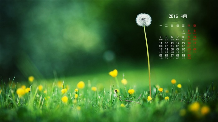 Dandelion meadow-April 2016 Calendar Wallpaper Views:1318