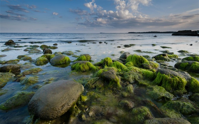 Green Beach Stones-Germany Rugen HD Wallpaper Views:3193 Date:3/4/2016 7:48:50 AM