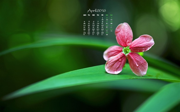 Small red flowers-April 2016 Calendar Wallpaper Views:1805