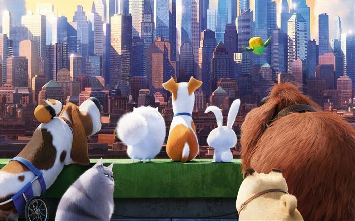 The secret life of pets 2016-Movie High Quality Wallpaper Views:1395