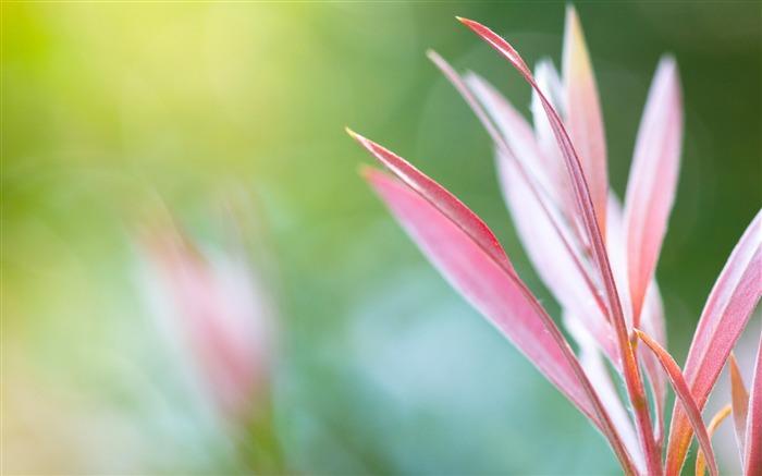 ボケ (植物)の画像 p1_37