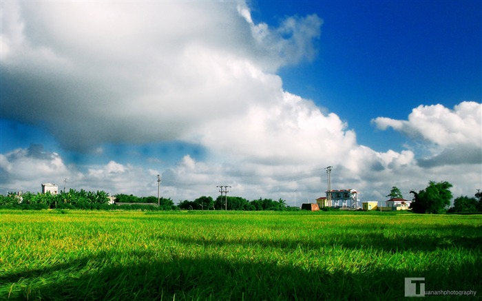 Nature Scenery Clouds Green Field-LOMO photo HD wallpaper Views:1643