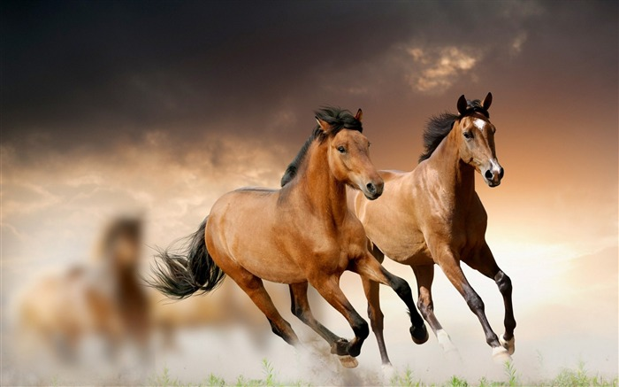 Horse Running Grass Clouds-Grassland animal HD Wallpaper Views:3077