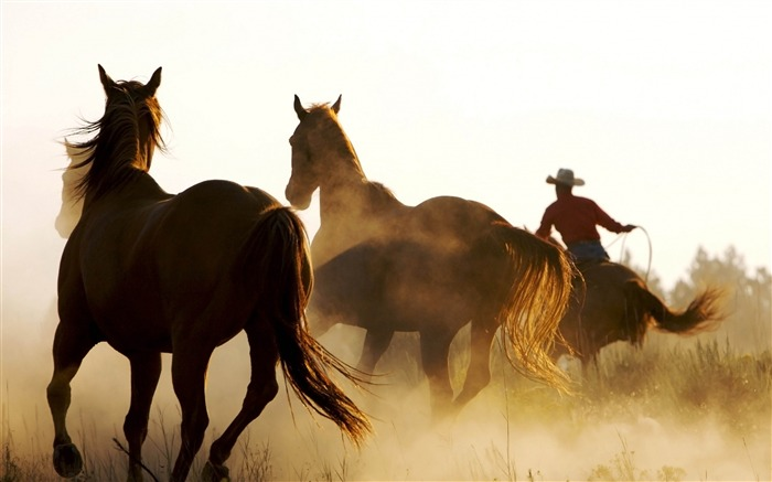 Horse cowboy lasso-Grassland animal HD Wallpaper Views:1949