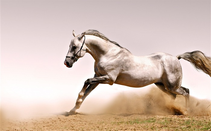 Horse dust grass jump-Grassland animal HD Wallpaper Views:1951