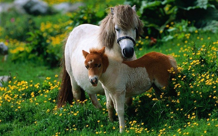 Horse flowers walk family-Grassland animal HD Wallpaper Views:3095