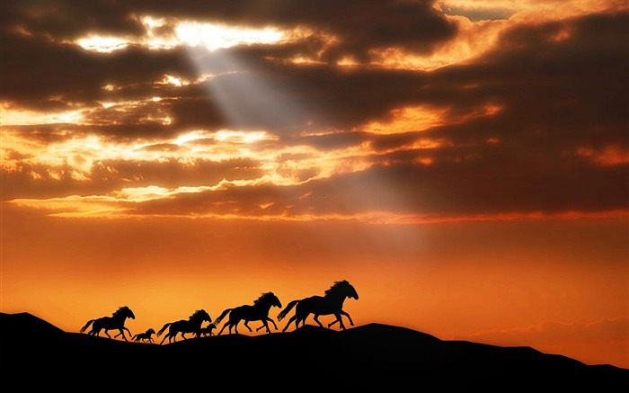 Horse herd sunset silhouettes escape-Grassland animal HD Wallpaper Views:1485