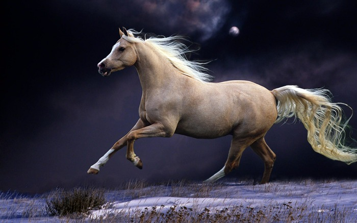 Horse mane running beautiful night sky-Grassland animal HD Wallpaper Views:2063