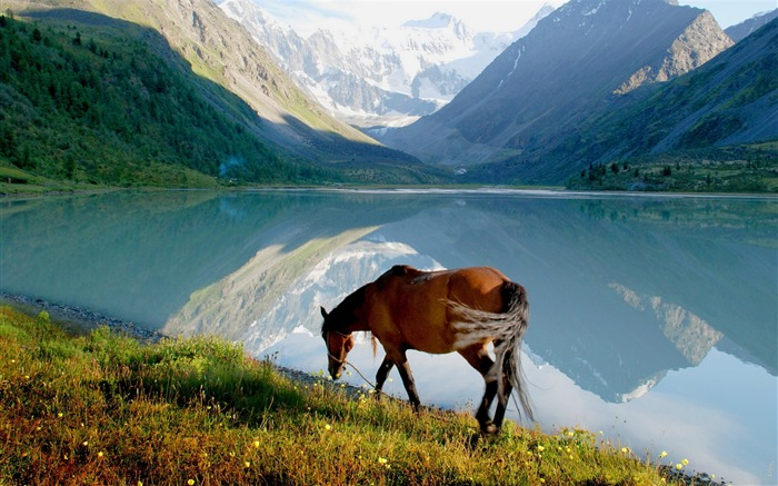Horse mountain lake walk-Grassland animal HD Wallpaper Views:2057
