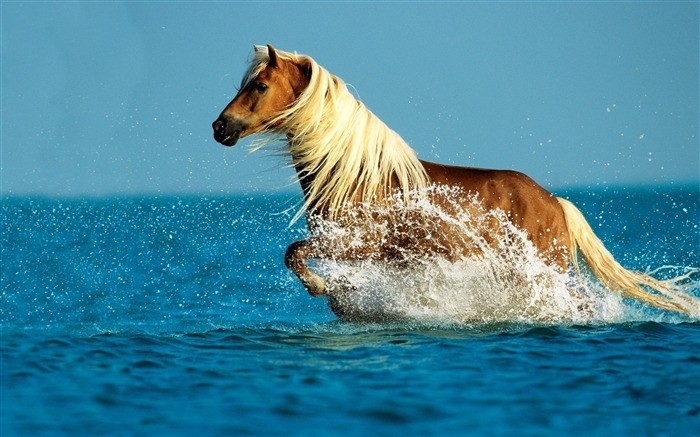 Horse water spray walk sky sea-Grassland animal HD Wallpaper Views:812