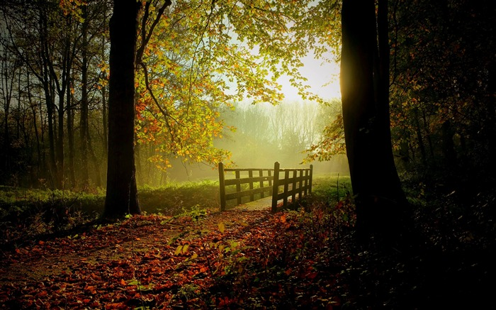 Morning sunny forest-Nature Scenery HD Wallpaper Views:926