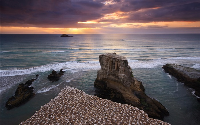New Zealand Gannet Colony Muriwai-Nature Scenery HD Wallpaper Views:1560