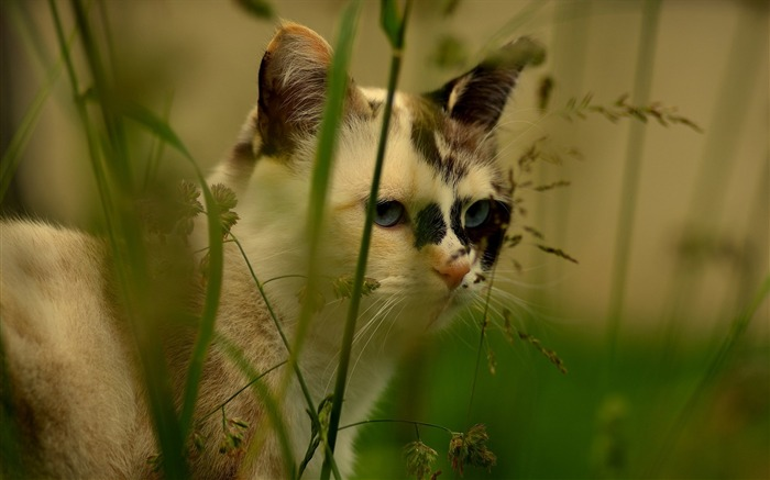 Cat face grass spotted-Animal Photo HD Wallpaper Views:2757 Date:6/12/2016 5:54:59 AM