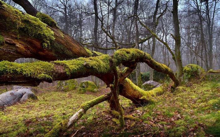 Dry mossy wood forest-scenery HD wallpaper Views:1795