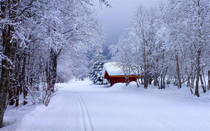 Forest snow road house-nature HD photo wallpaper Views:6213