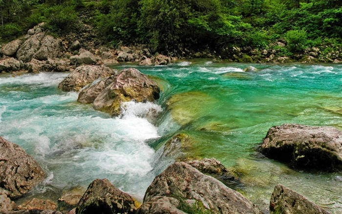 Forest whirling river-scenery HD wallpaper Views:771