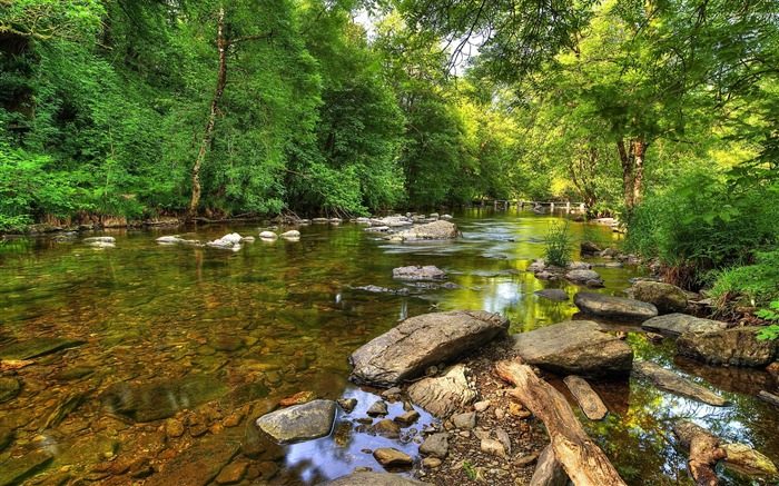 Green forest rocky river-High Quality HD Wallpaper Views:1768