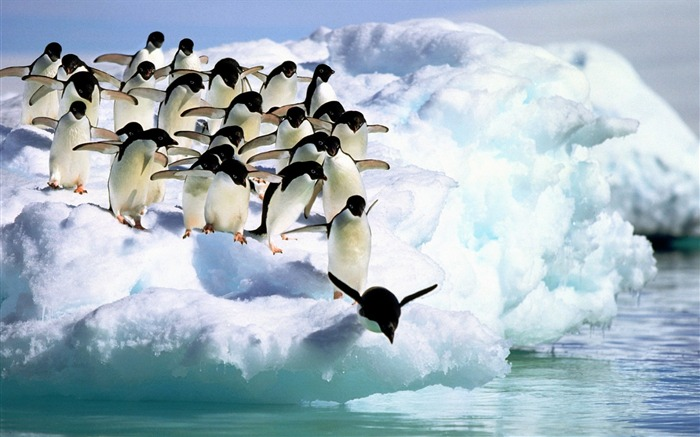 Penguins water snow-Animal Photo HD Wallpaper Views:4266 Date:6/12/2016 6:05:14 AM