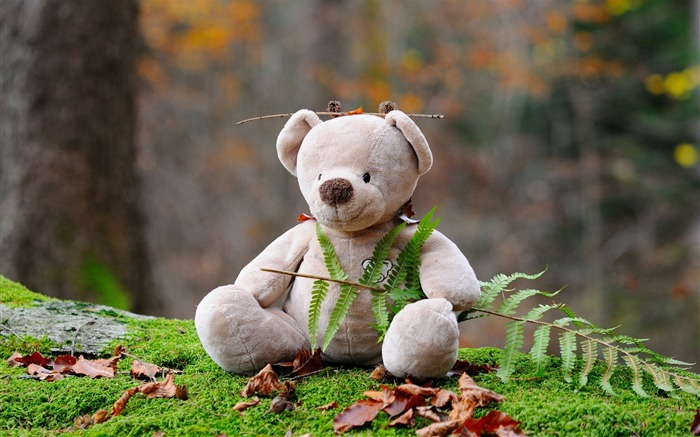 Teddy bear toy forest-2016 High Quality HD Wallpaper Views:783