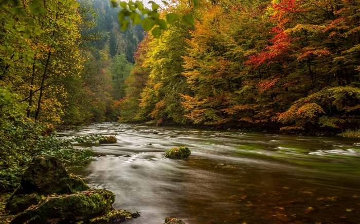 Harz germany autumn river trees-Scenery High Quality Wallpaper Views:1443