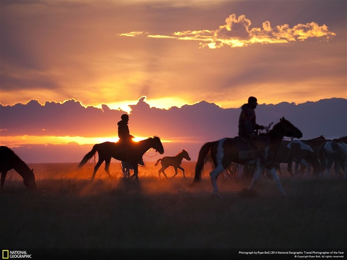 Horse Foal con Rim Light-National Geographic fondo de pantalla Vistas:2050