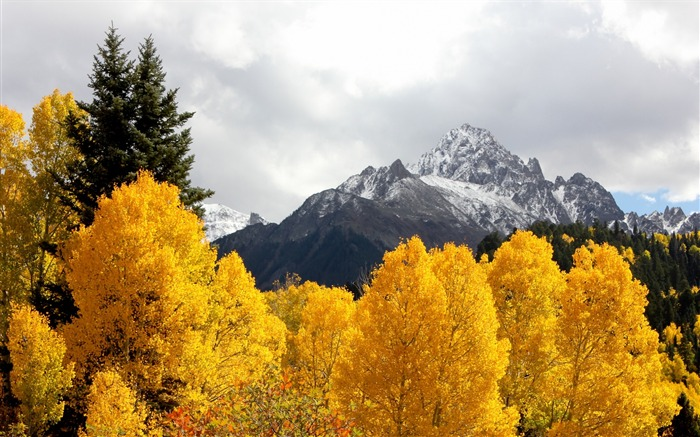 Mountains trees snow peaks autumn-Scenery High Quality Wallpaper Views:1532