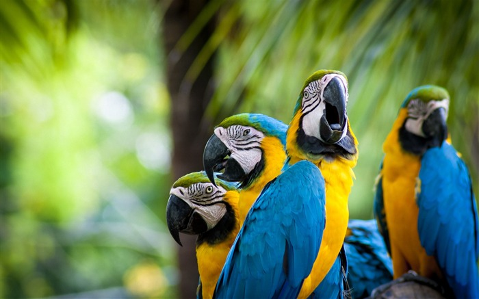 Cute Macaw Parrots-Animal Photos HD Wallpaper Views:2202