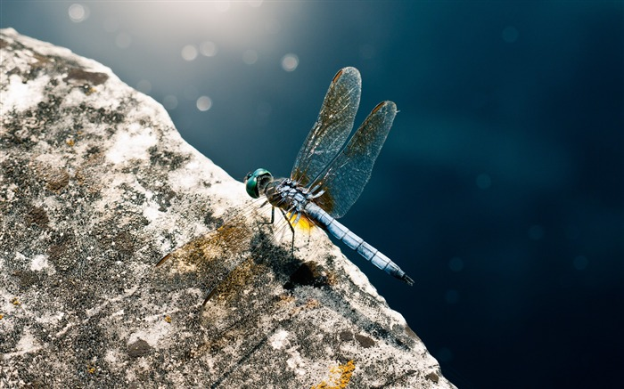 Dragonfly insect wings surface-Macro photography wallpaper Views:1207